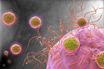 Virus electron microscope