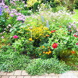 Leinwanddruck Bild - Blühende Staudenpflanzen im Garten, Bauerngarten