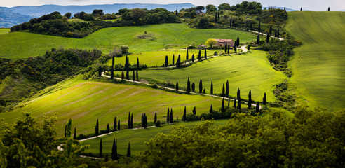 Tuscany, cypress road in the beautiful green hills,italy