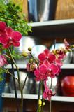 Fototapety greenhouse