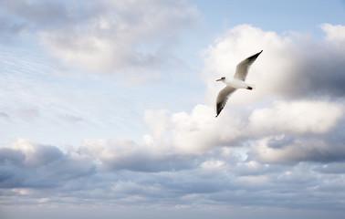 Möwe im Himmel