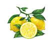 Leinwanddruck Bild - Watercolor drawing of lemon
