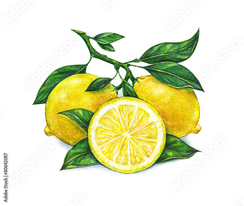 Watercolor drawing of lemon © MargaritaSh