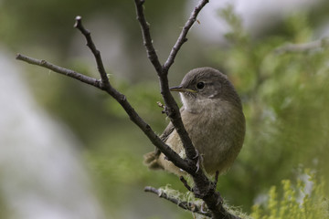 ave pequeña pajaro