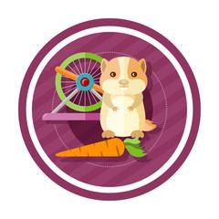 Golden hamster eating carrot