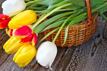Colorful tulips in a basket on a wooden background