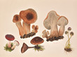 Mushrooms painting, modern art with flora from Romania - 80646607