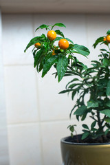 Christmas cherry over kitchen wall