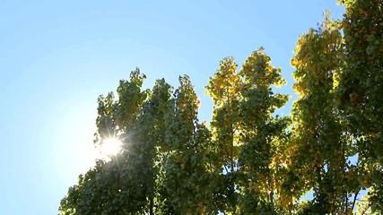 Los árboles se mueven por la fuerza del viento