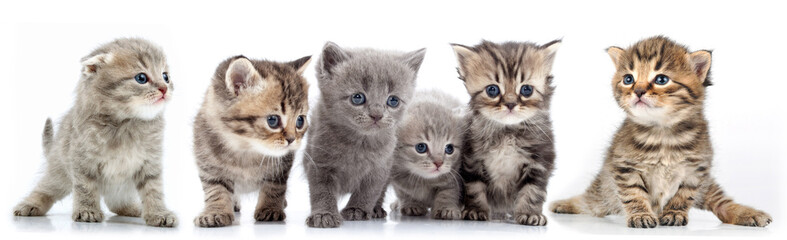 large group of kittens against white background