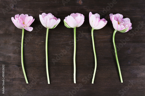 Papiers peints Tulip Fresh tulips on wooden background