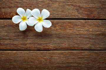 White frangipani on wooden background