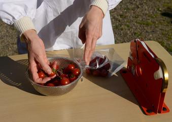ミニトマトの出荷準備をする女性