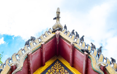 Pigeon on Thai temple roof with blue sky