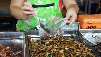 Selling fried insects, typical Thai street food