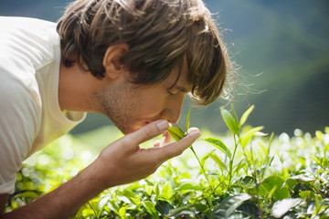Young Man Smelling Tea Leaves