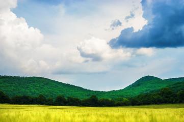 Buda hills landscape