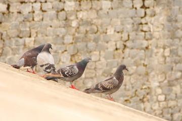 Dubrovnik, a Mediterranean town