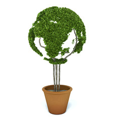 Pot plant shaped like a world map. Ecology and green lifestyle c