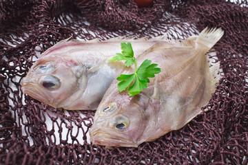 fresh fish in fishing net