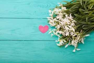 Snowdrops and paper pink heart on blue wooden background
