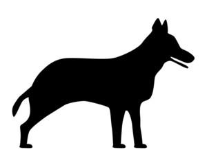 Schäferhund Silhouette