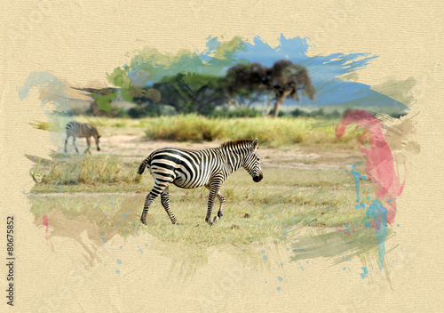 Aluminium Zebra Zebra on textured paper. Brush effect