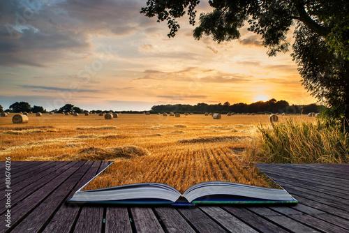 Rural landscape image of Summer sunset over field of hay bales c