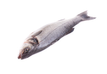 Close up of fresh seabass fish.