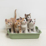 Kittens sitting in cat toilet