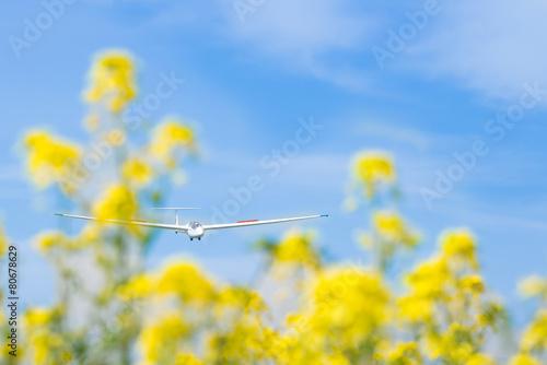 グライダーと菜の花 - 80678629