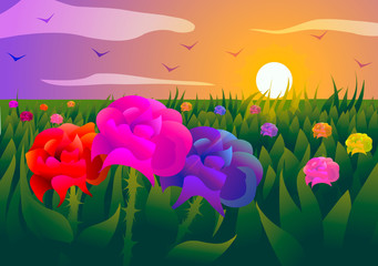 Vector illustration. Field of roses at sunset.