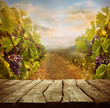 Vineyard design - 80680458