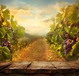 Vineyard design - 80680491