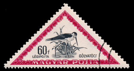 Stamp printed in Hungary shows black-winged stilt