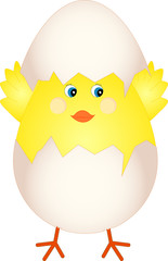 Baby chick just hatched from an Easter egg