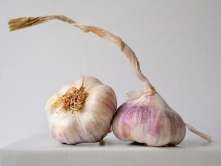 Purple garlic from organic farming. Czech garlic.