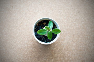 Small green plant in the pot on the cork board background