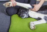 Hund Physiotherapie