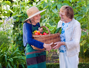Senior Women Holding a Basket of Fresh Vegetables