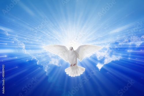 Holy Spirit came down like dove - 80689433
