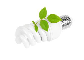Energy saving light bulb and plant on white background