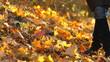 Legs girl on autumn leaves of maple