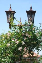 Pink bush near a lamppost.