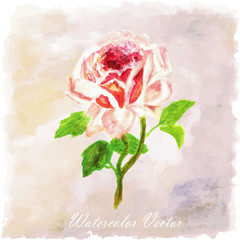 red,pink Watercolor floral summer,spring background.colorful ros