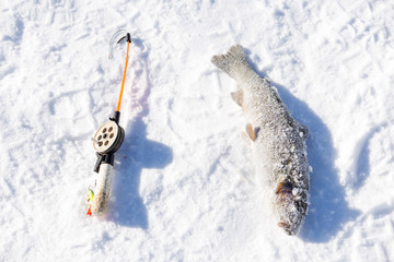 small rod for winter fishing and trout in  snow