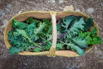 basket of freshly picked egological kale