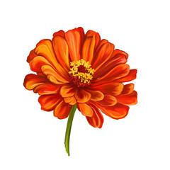 dahlia flower vector illustration  hand drawn  painted