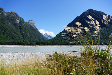 Toi toi in breeze in Southern Alps landscape