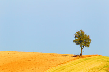 Farmer field.Lonely tree and background of the sky.